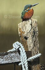 'Kingfisher and ropes' by Steven Lingham Ltd Edition Giclee Print Wildlife Bird