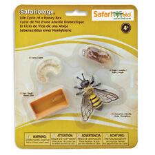 Life Cycle Of A Honey Bee Figures Safari Ltd NEW Toys Educational Figurines