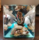 Vintage Souvenir Of Florida Scenic Sea Life Shells Encased In Lucite Paperweight