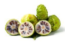 50 Graines de Pomme-chien, Morinda Citrifolia, Noni, Nono, Indian Mulberry seeds