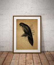 Black Vintage Animals Art Prints