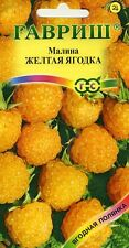 "Raspberry ""Yellow Berry"". Russian High Quality"