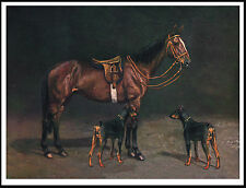 DOBERMAN PINSCHER TWO DOGS AND A HORSE GREAT DOG PRINT POSTER