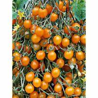 25 Organically Grown Heirloom Black Brandywine Tomato Seeds-E 023