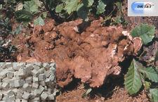 DR T&T 100 G poria cocos LUPO/FU LING ERBE A SECCO