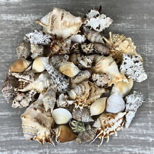 Muschelmix groß 1Kg echte Dekomuscheln Meeresschnecken maritime Dekoration