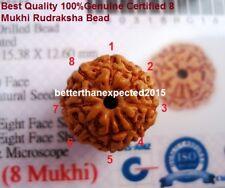 Lab Certified 8 Mukhi Rudraksha / Eight Face Rudraksh  Java Bead--14-16 mm