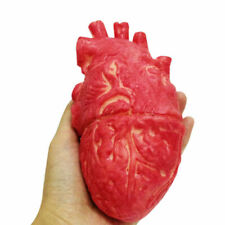 Halloween Human Heart Prop Realistic Life Size Chop Blood Shop Sell M3V4