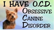 YORKSHIRE TERRIER - OBSESSIVE CANINE DISORDER Dog Car Sticker By Starprint