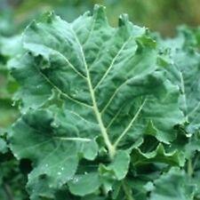 Kale Premier Great Heirloom Vegetable By Seed Kingdom BULK 1/4 Lb Seeds