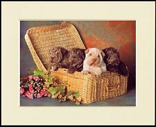 SHAR PEI  4 PUPPIES IN A BASKET CHARMING DOG PRINT MOUNTED READY TO FRAME