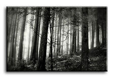 Large Wall Art Canvas Picture Print of Forrest in B/W Framed