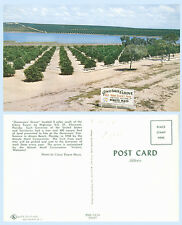 Minute Maid Orange Governors Grove Clermont Florida Advertising Tree Postcard