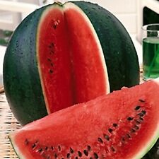 Vegetable Seeds Watermelon Sugar Baby Organically Grown NON GMO