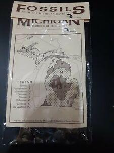 Fossils Of Michigan Set
