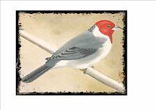 El papa cardenal Vintage Placa de pared jaula pájaro imagen Sluis aviario signo