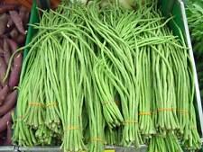 100% Original Snake Bean Yard Long 50 Heirloom Organic Vegetable Seeds New++