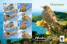 Guernsey 2017 Vogels  WNF WWF   speciaal vel met 2x 4 zegels !!!    postfris/mnh