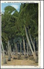 Florida USA Postcard 1920/30 Natural Coconut Grove Kokospalmen Palmen Strand