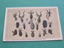 Group of Foreign Horns Alberts Buckhorn Saloon Taxidermy Postcard