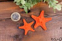 Set 2 Natural Orange Knobbly Starfish Aquarium, Wedding Party Photography Craft