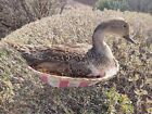 Stuffed Nesting Duck Basket Taxidermy Beauty Colorful Bird  Easter brooding