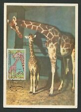 Czechoslovakia Mk 1977 fauna Giraffe Girafe Maximum Card Carte Maximum Card Mc c.