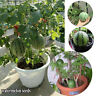 KQ_ 20Pcs Mini Watermelon Seeds Sweet Organic Fruit Garden Yard Farm Bonsai Plan