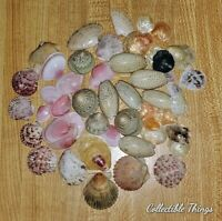 Shells Seashell Mixed Lot of 40 + Olives Rose petal tenins and More