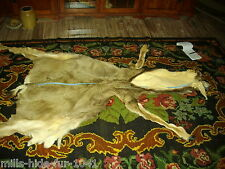 Taxidermy Lg.Tanned Mule Deer Buck Lifesize Skin for a POSSIBLE mount no Antlers