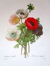 P.J. Redoute # 7 Anemone Simple
