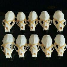 10 Pcs Mink Skulls/Real Animal Skull/ Real Bone/ New