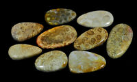 09Pcs Natural Fossil Coral Fancy Cabochon Loose Gemstone 386Cts.Lot K965