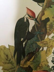 "Pileated Woodpecker Audubon Print 11.5"" x 15"" Lithograph 255"