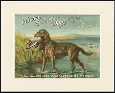 CHESAPEAKE BAY RETRIEVER GREAT DOG FOOD ADVERT PRINT MOUNTED READY TO FRAME