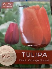2 Packages of 3 Giant Orange Sunset Tulip Bulbs Zones: 3-8.  Spring Blooming
