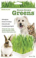 Home Grown Greens Cat Grass - SATR3