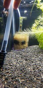 Corner box filter. Preseeded. Ready to start aquarium cycle,