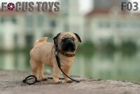 FOCUS TOYS 1/6 F03 Yellow Pug Model Dog Animal Figure Soldier Pet Toy Toys Gifts