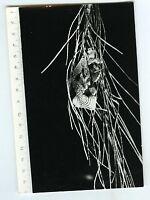 PHOTO scientifique plante botanique science CURIOSA herbier forme monstrueuse