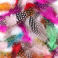 50pcs Mixed Color Guinea Hen Feather Chicken Feathers Craft Decor Embellishment