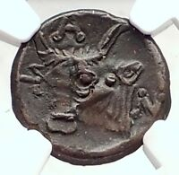 PANTIKAPAION in BOSPORUS 325BC Authentic Ancient Greek Coin Pan Bull NGC i73294