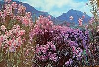 Vintage Postcard Hawaii Hawaiian Orchid Tropical Flowers Mountains Unposted 1950