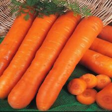 Vegetable Carrot Early Nantes 2 Appx 8000 seeds 10 grams