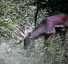 Critical Mass Trophy Whitetail Mineral.Trail Camera/Food Plot/Hunting/Feed-16lbs