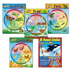 Trend Kid Learning Chart - Theme/subject: Learning - Skill Learning: Life Cycle