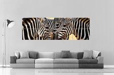 Zebre Zebra Sauvage Panorama  Poster Grand format 168cm X 59,4CM Large Print