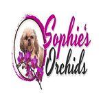 Sophie's Orchids