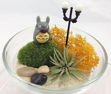 Air Plants mini GlassTerrarium Kit  w/Gift Box  - Totoro stand under the lamp