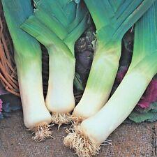 Vegetable Leek Winter Giant 3 Appx 100 seeds